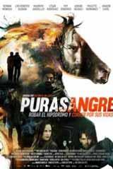 purasangre-2016-160